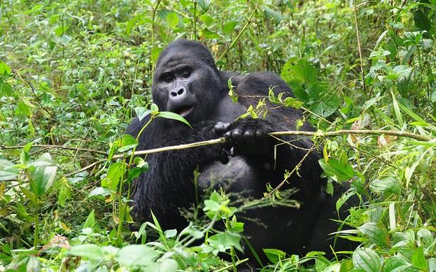 2 Days Uganda Gorilla Safari