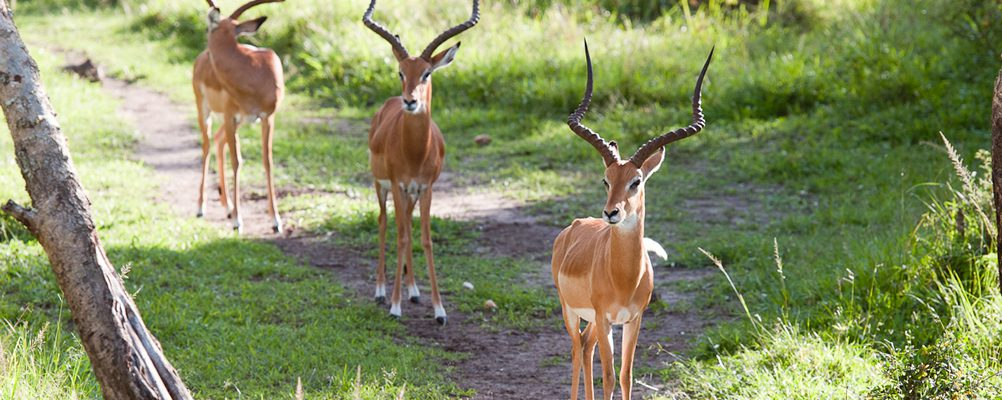 3 Days Lake Mburo Wildlife Safari