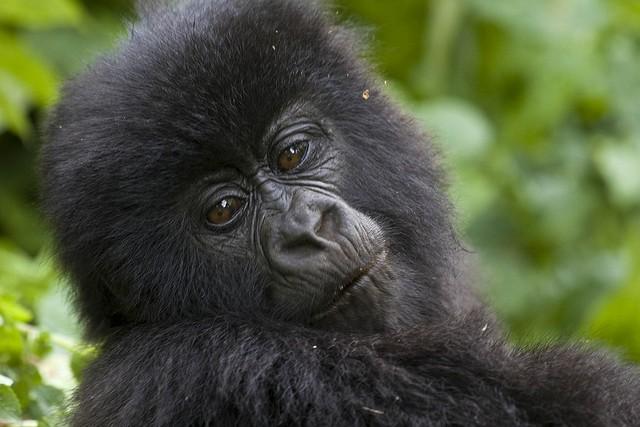 4 Days Gorillas & Wildlife Adventure