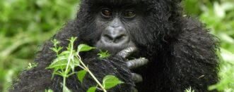 2 Days Gorillas and Bisoke Hike