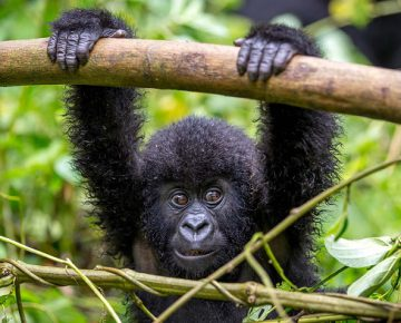 3 Days Affordable Gorilla Tour