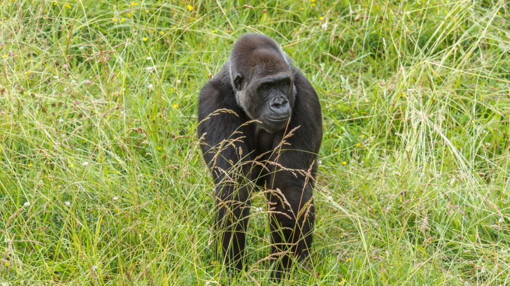 4 Days Lowland Gorillas and Nyiragongo