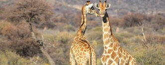 5 Days Gorillas and Wildlife Safari