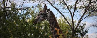 11 Days Rwanda Safari Special