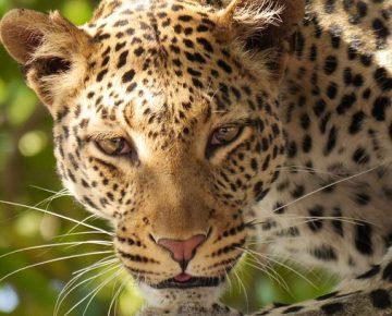 8 Days Rwanda Safari Holiday