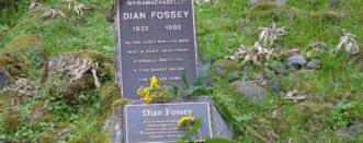 3 Days Gorillas & Dian Fossey