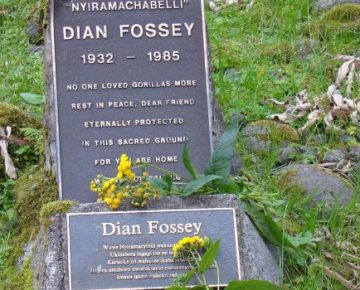3 Days Gorillas & Dian Fossey