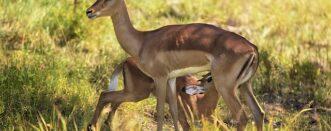 4 Days Akagera Wildlife Special