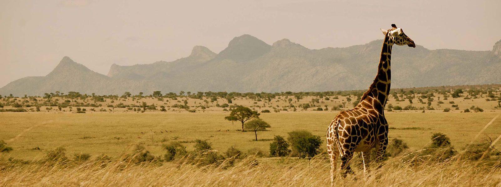 Uganda Safaris Adventure