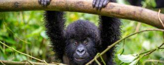 12 Days Uganda Gorillas & Wildebeest Migration